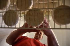 tem-camembert-mozzarella-ou-roquefort-russes-ru00e9ponse-u00e0-lembargo-1
